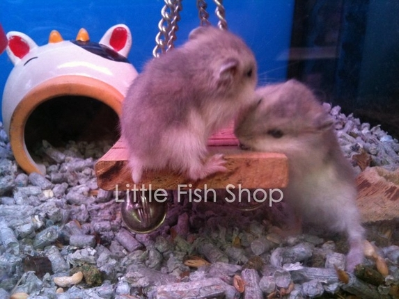 Little fish shop gallery for Pet stores that sell fish