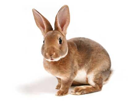 essential rabbit care tips pets 101. Black Bedroom Furniture Sets. Home Design Ideas