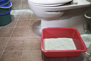 Cat litter beside toilet bowl