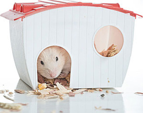 Housing for Hamsters
